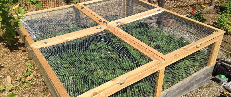 Strawberry Enclosure